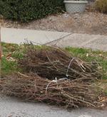 Branch bundles